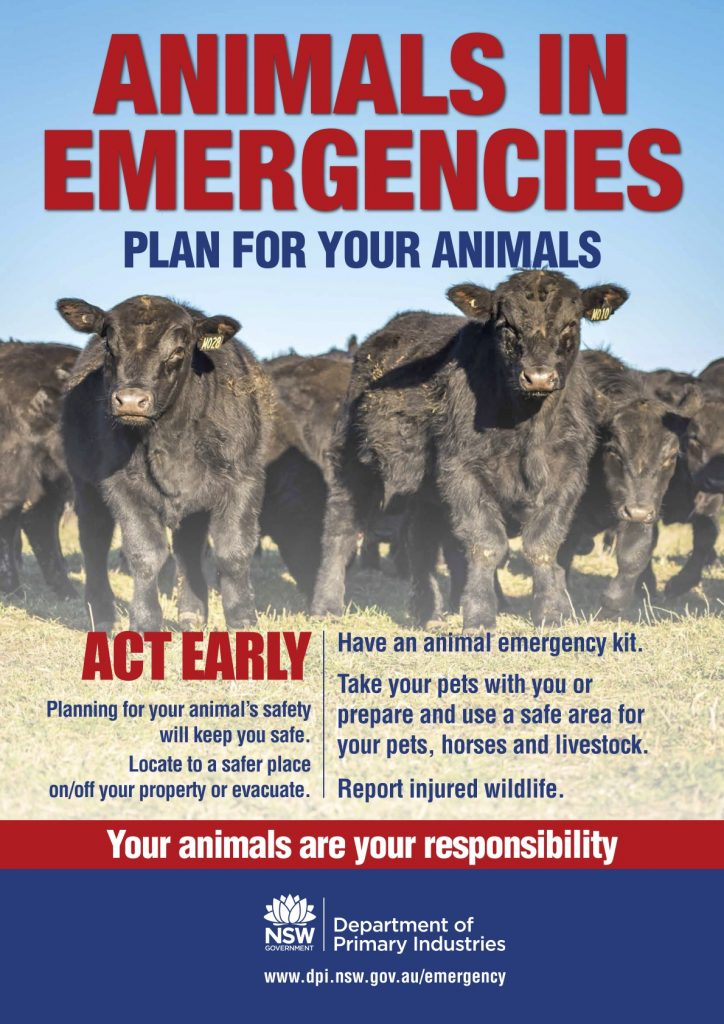 Animals in Emergencies Cattle