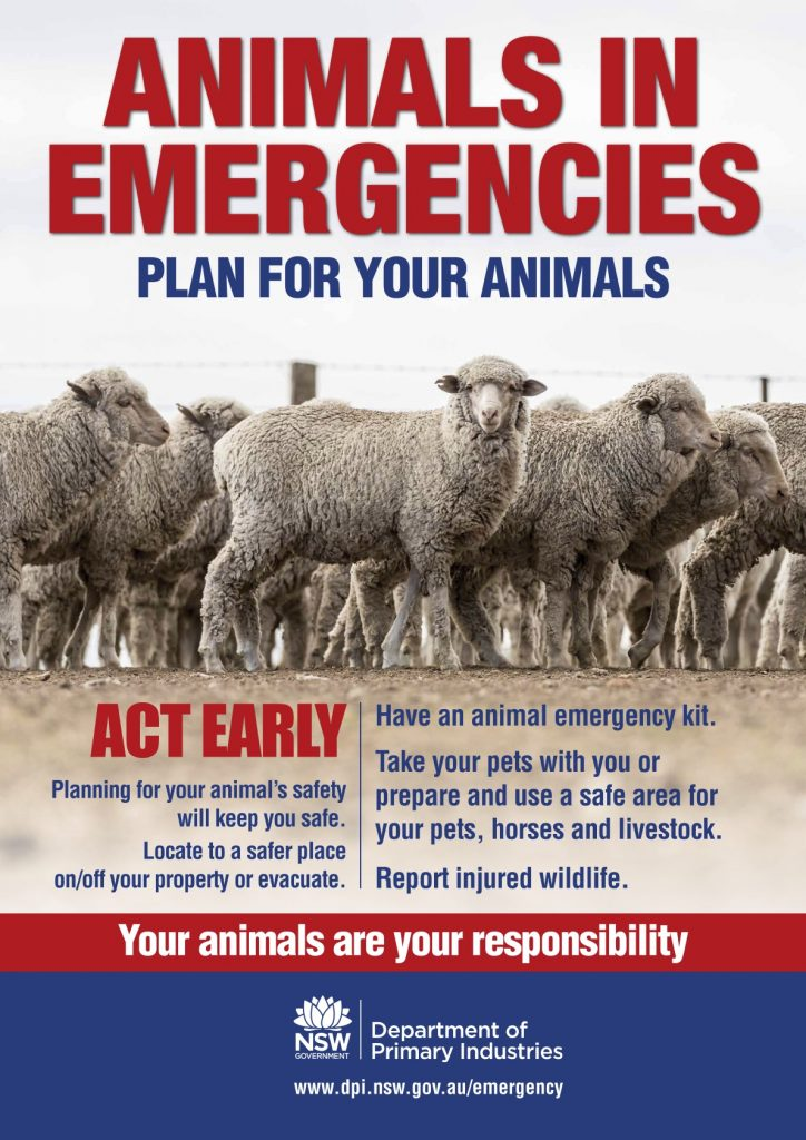 Animals in Emergencies Sheep