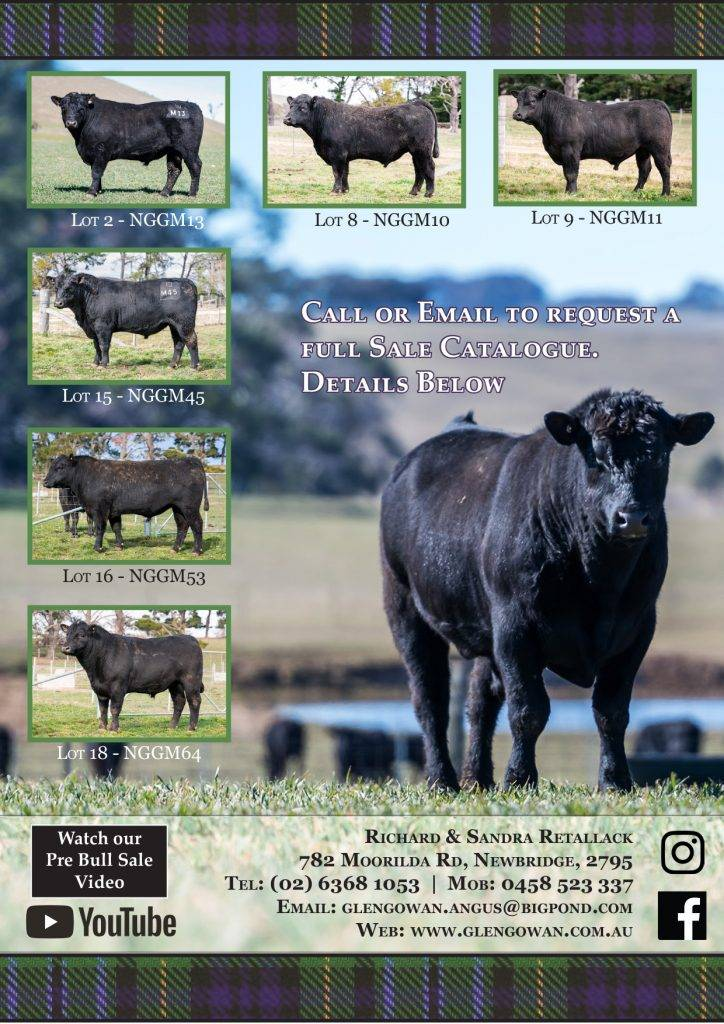 Angus cattle sale catalogue