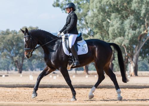 dressage horse